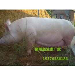 猪喂益生菌肠道好吸收好长得快