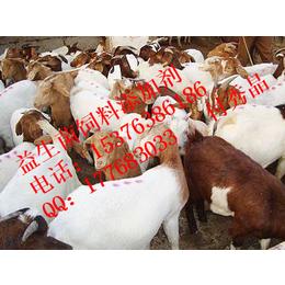 乳酸菌芽孢杆菌等有益菌对育肥羊的作用
