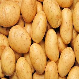 海伦市金梅薯业有限公司马铃薯加工