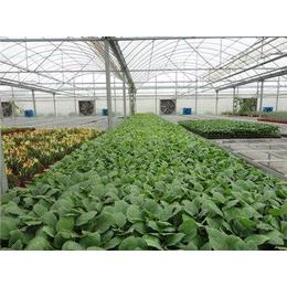 花卉温室大棚-覆盖材料-基础设施-验收标准-河北安平
