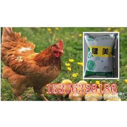 蛋鸡复合活性益生菌调节肠道减少过料