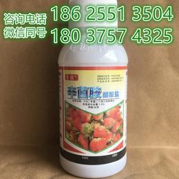 预防草莓炭疽病批发锁菌净烂果烂叶辛菌胺醋酸盐