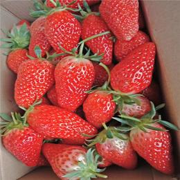 建德草莓苗(图),红颜草莓苗批发基地,包头草莓苗