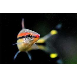 庆祥伟业观赏鱼(图),淡水观赏鱼,河南观赏鱼