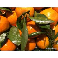 为什么超市的桔子、橙子那么光亮?到底有没有打蜡?