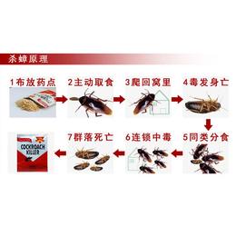 南宁市康程(图)-电影院蟑螂消杀服务-蟑螂消杀服务