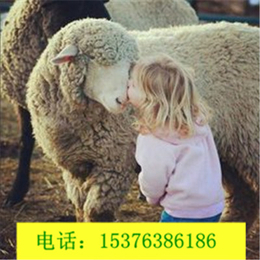 肉羊料场专用益生菌原料调节肠道提高采食量