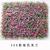 广州植物绿化彩色米兰假草户外景观塑料花彩色假草坪缩略图4