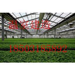 承建温室大棚-智能温室-连栋温室-专业设计安装-规格全质量好