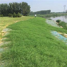 绿化施工植物纤维毯植被毯