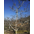 核桃树的雄花什么样子缩略图2