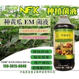 黄瓜保花保果用的em菌液怎么用