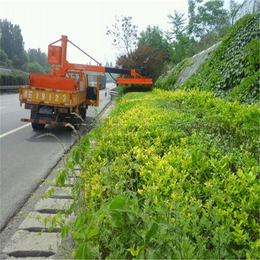 黄南绿化修剪机定做-金力机械原装现货-车载式绿化修剪机定做