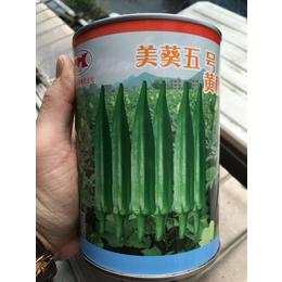 日本美葵五号秋葵种子