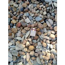 建筑铺路鹅卵石 广东鹅卵石原产地 长期供应各种鹅卵石