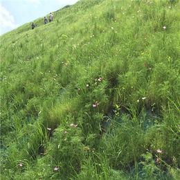 供应河道边坡绿化环保草毯椰丝毯生态毯