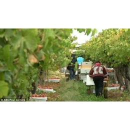 英國農場急招搬運工果木采摘工-蔬菜種植工-蔬菜包裝工