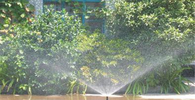 智能灌溉系統幫助果樹低于剛問風災,保證鱷梨豐收